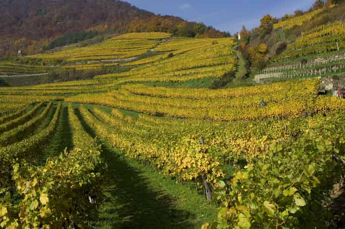 Weingaerten